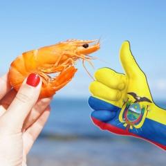 Đầu tư điện năng: Bí quyết giúp tôm Ecuador bật nhảy