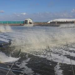 Cả nước có 21.000 mô hình sản xuất liên kết theo chuỗi, ứng dụng công nghệ cao