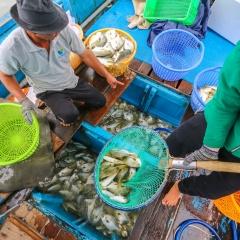 Ngư dân Khánh Hòa bán cả lồng cá để chạy bão số 9