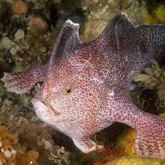 Một con cá chết khiến giới khoa học bàng hoàng