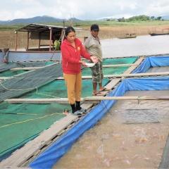 Vùng núi Kon Tum khai thác lợi thế để nuôi cá lồng bè