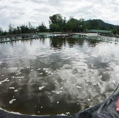 Thanh Hóa phát triển thủy sản tập trung theo hướng công nghiệp