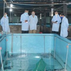 Công nghệ nuôi tôm hùm thương phẩm trong bể