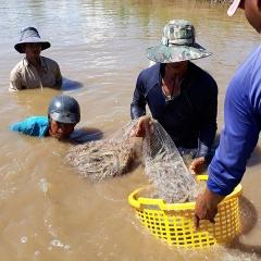 Giá nhiều loại thủy sản ở Trà Vinh giảm