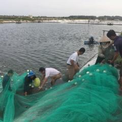 Quảng Ninh bùng nổ nuôi tôm công nghệ