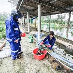 Quảng Trị đứng trước nguy cơ thiếu giống thủy sản