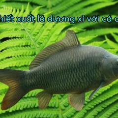 Bột lá dương xỉ tăng cường các đáp ứng miễn dịch trên cá chép