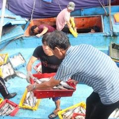 Sau bão, ngư dân Bình Định tấp nập vươn khơi
