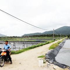 Khánh Hòa đề xuất nuôi tôm kết hợp sản xuất điện mặt trời