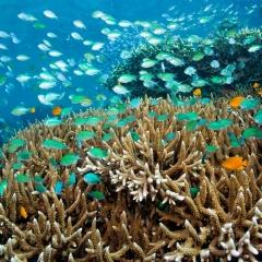 Phát triển công nghệ sinh học biển
