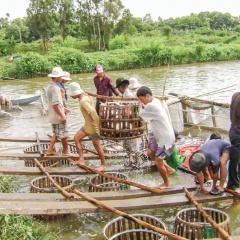 Cần có giải pháp phòng, chống dịch bệnh thủy sản hiệu quả