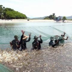 Cà Mau đưa tiến bộ khoa học vào nông nghiệp, thủy sản