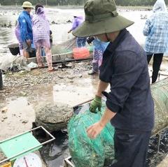 """Sợ thua lỗ nặng, người nuôi tôm ở Hà Tĩnh quyết bán """"được đồng nào hay đồng ấy"""""""