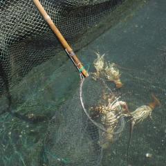 Gần 26% diện tích nuôi trồng thủy sản miền Trung bị thiệt hại do bão lũ