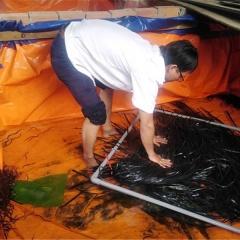 Cấp phát 2.100 lươn giống và thức ăn cho hộ nuôi