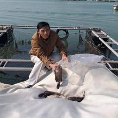Lộ nguyên nhân cá chết trắng hàng trăm lồng bè ở Quảng Ninh ngày áp Tết