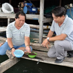Bí quyết làm giàu: Thu lãi hàng trăm triệu từ nuôi cá lồng bè