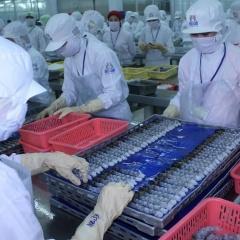 Cơ hội vàng đẩy mạnh tăng trưởng ngành tôm