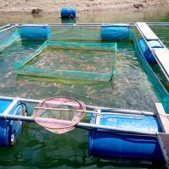 Quảng Nam: Nuôi cá lồng bè thủy điện, nhà nào cũng thu vài trăm triệu