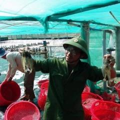 Bạc Liêu: Kỳ vọng xuất khẩu thủy sản đạt 1 tỷ USD