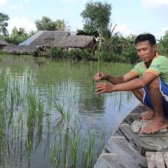 Hàng ngàn ha lúa tôm ở Kiên Giang bị thiệt hại do đất nhiễm mặn