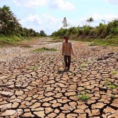 Xâm nhập mặn ở đồng bằng sông Cửu Long tăng dần từ ngày 11-1