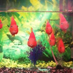 Những điều cần biết trước khi nuôi một bể cá cảnh