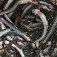 Đầu năm, người nuôi vui vì tôm, cua, cá nhất loạt tăng giá