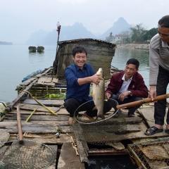 Cá lồng sông Gianh sẵn sàng phục vụ Tết