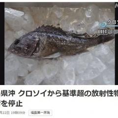 Nhật phát hiện cá nhiễm phóng xạ ở Fukushima