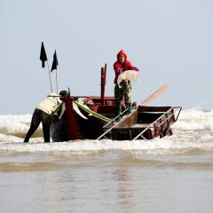 Đánh bắt, chế biến sứa biển, có ngày ngư dân Hà Tĩnh được gần chỉ rưỡi vàng