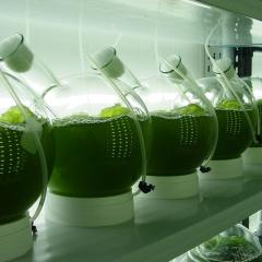 Những tiến bộ trong sản xuất các sản phẩm vi tảo giá trị cao