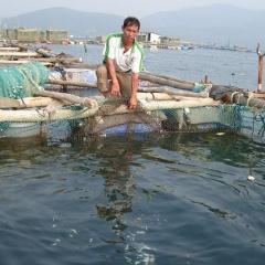 Đầu tư, phát triển nuôi biển theo hướng bền vững