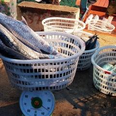Cần xây dựng thương hiệu cá thu Cửa Việt