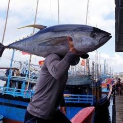 """Lạ lùng đặc sản """"đèn pha đại dương"""" trông thì ghê, ăn lại mê ở Phú Yên"""