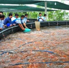 Phê duyệt kế hoạch quốc gia phòng, chống dịch bệnh thủy sản đến năm 2030