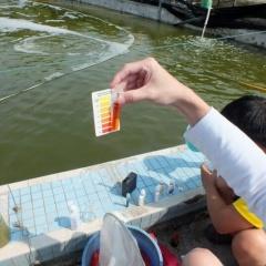 6 mẹo để quản lý chất lượng nước trong nuôi tôm