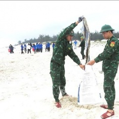 Lan tỏa phong trào làm sạch biển, bảo vệ môi trường tại Quảng Bình