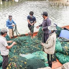 Chú trọng đào tạo nghề cho ngư dân