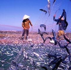 Thả cá tái tạo nguồn lợi thủy sản: Tạo sinh kế cho người dân