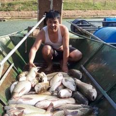 Nghệ An: Làm giàu từ nuôi cá lồng ở lòng hồ thủy điện