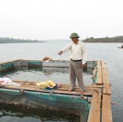 Nuôi cá lồng trong hồ thủy lợi, thủy điện: Nhiều triển vọng