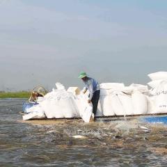 Giảm bớt áp lực cho ngành hàng cá tra