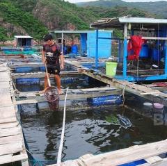 Quản lý rác thải vùng nuôi thủy sản bằng lồng bè: Người nuôi nâng cao nhận thức