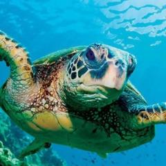 Lan tỏa hoạt động bảo vệ rùa biển quý hiếm