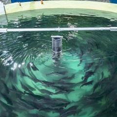 Nuôi cá hồi trong bể cạn - Điều điên rồ thành sự thật