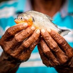 Một phần ba các loài Cá đang đối mặt với tuyệt chủng