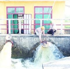 Chủ động thực hiện giải pháp chống xâm nhập mặn, bảo vệ sản xuất
