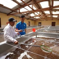 Grobest góp phần đa dạng nguồn tôm giống chất lượng cao cho các hộ nuôi