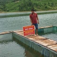 Phát triển nghề nuôi cá lồng trên sông hồ ở miền núi